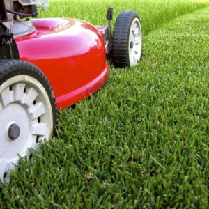 Lawncare & Garden Maintenance Tips